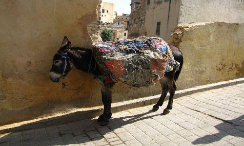 Zdjęcie MAROKO / medina / Fez / jedyny środek transportu w medinie