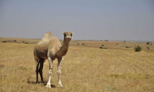 Zdjecie MAROKO / okolice Tafraote / Maroko / spotkanie w drodze
