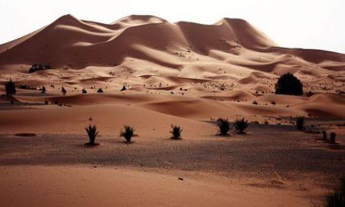 Zdjecie MAROKO / Maroko południowo-wschodnie / Merzuga / Pustynia 2
