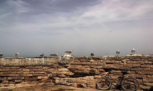 Zdjecie MAROKO / - / Essaouira / Essaouira2
