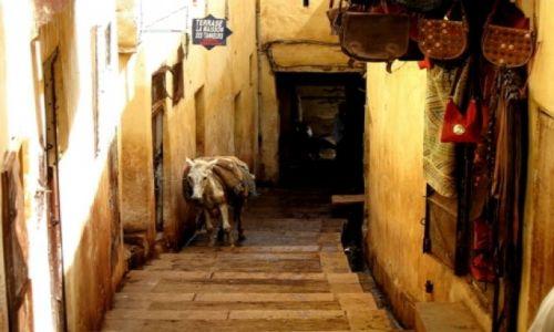 Zdjęcie MAROKO / - / Fez / wąskie uliczki mediny