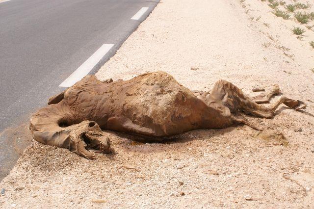 Zdjęcia: W drodze do Mali, Droga skór, MAURETANIA
