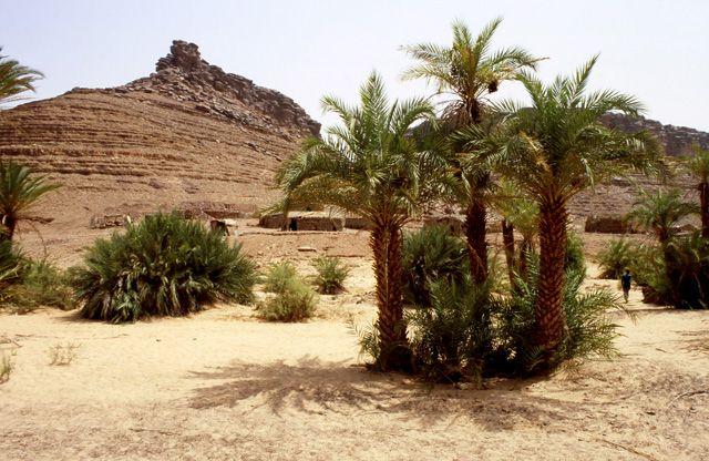 Zdjęcia: oaza Teizent, masyw Adraru, gaj palmowy w oazie, MAURETANIA
