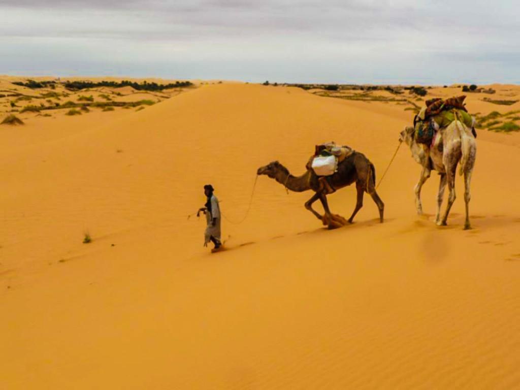 Zdjęcia: sahara, Sahara, pustynia, MAURETANIA