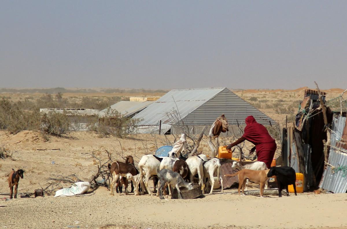 Zdjęcia: gdzieś po drodze, Mauretania, Wodopój, MAURETANIA