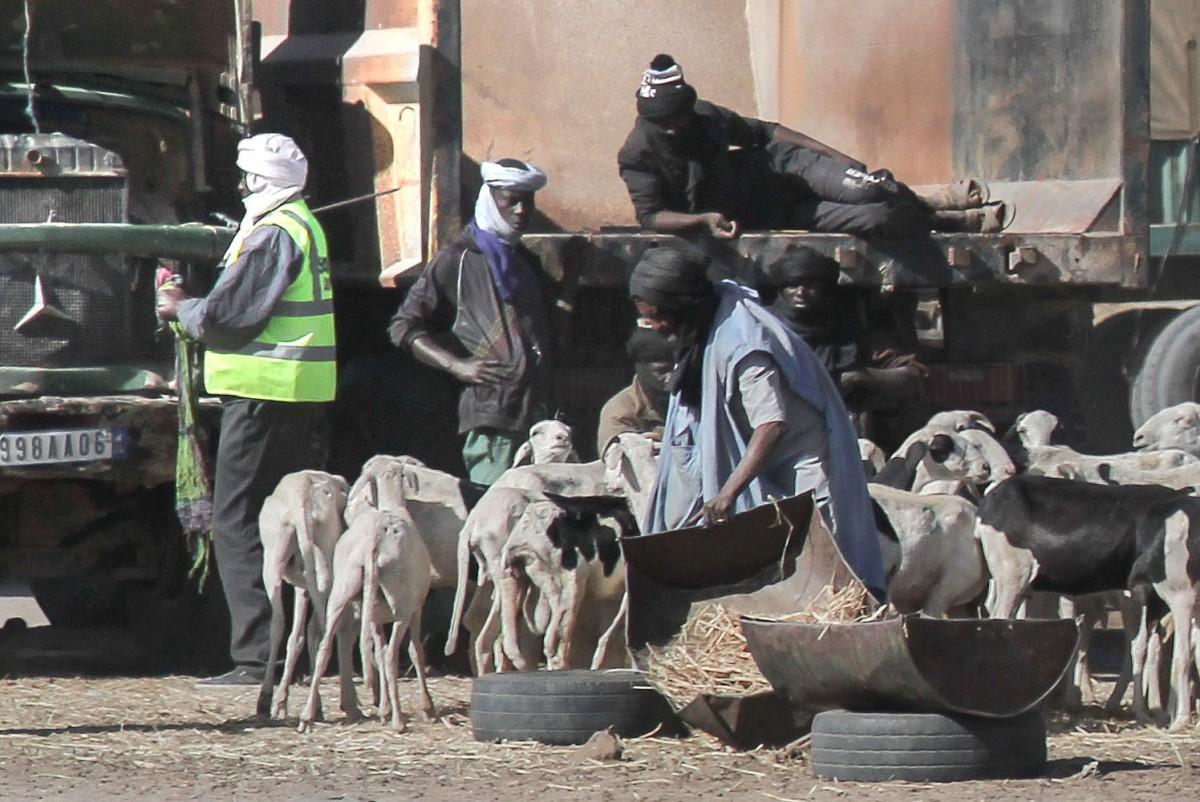 Zdjęcia: gdzieś po drodze, Nouakchott, Kozy, MAURETANIA