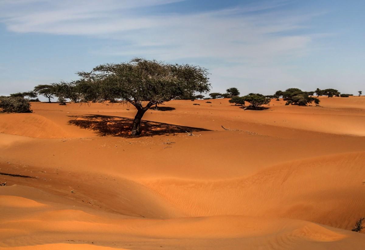 Zdjęcia: gdzieś po drodze, Mauretania, Piaski Mauretanii, MAURETANIA