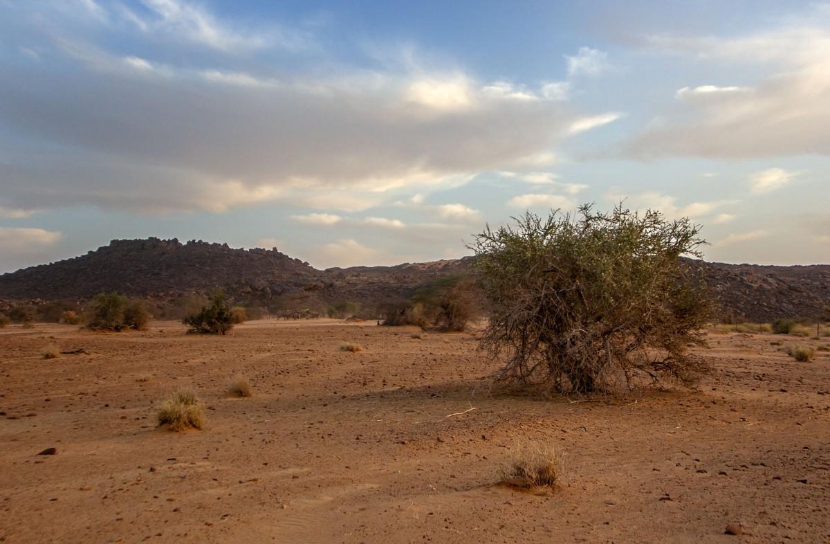 Zdjęcia: gdzieś w piaskach pustyni, Tagant, Wieczorna cisza, MAURETANIA