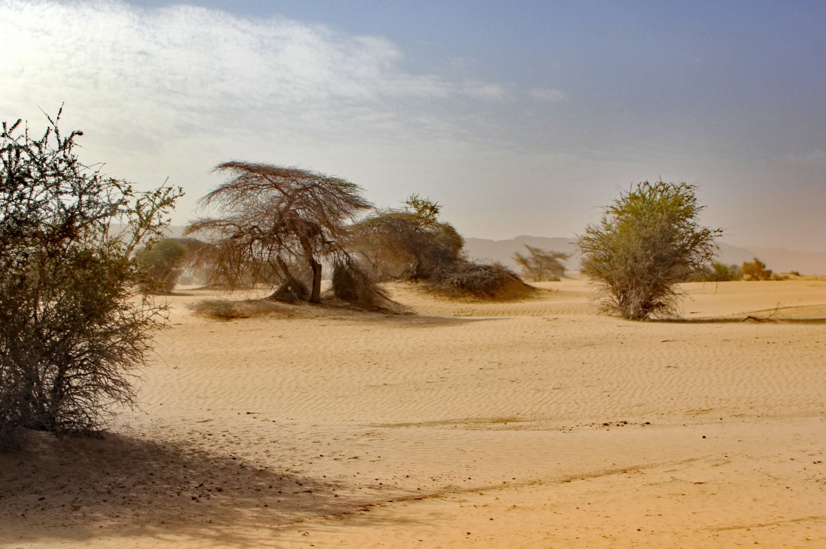 Zdjęcia: gdzieś w piaskach pustyni, Tagant, Wieje..., MAURETANIA