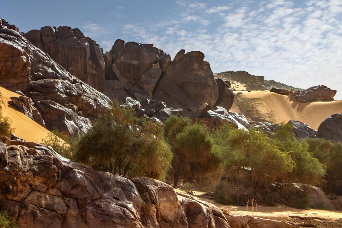 Zdjęcia: gdzieś w piaskach pustyni, Tagant, Wokół ouedu, MAURETANIA