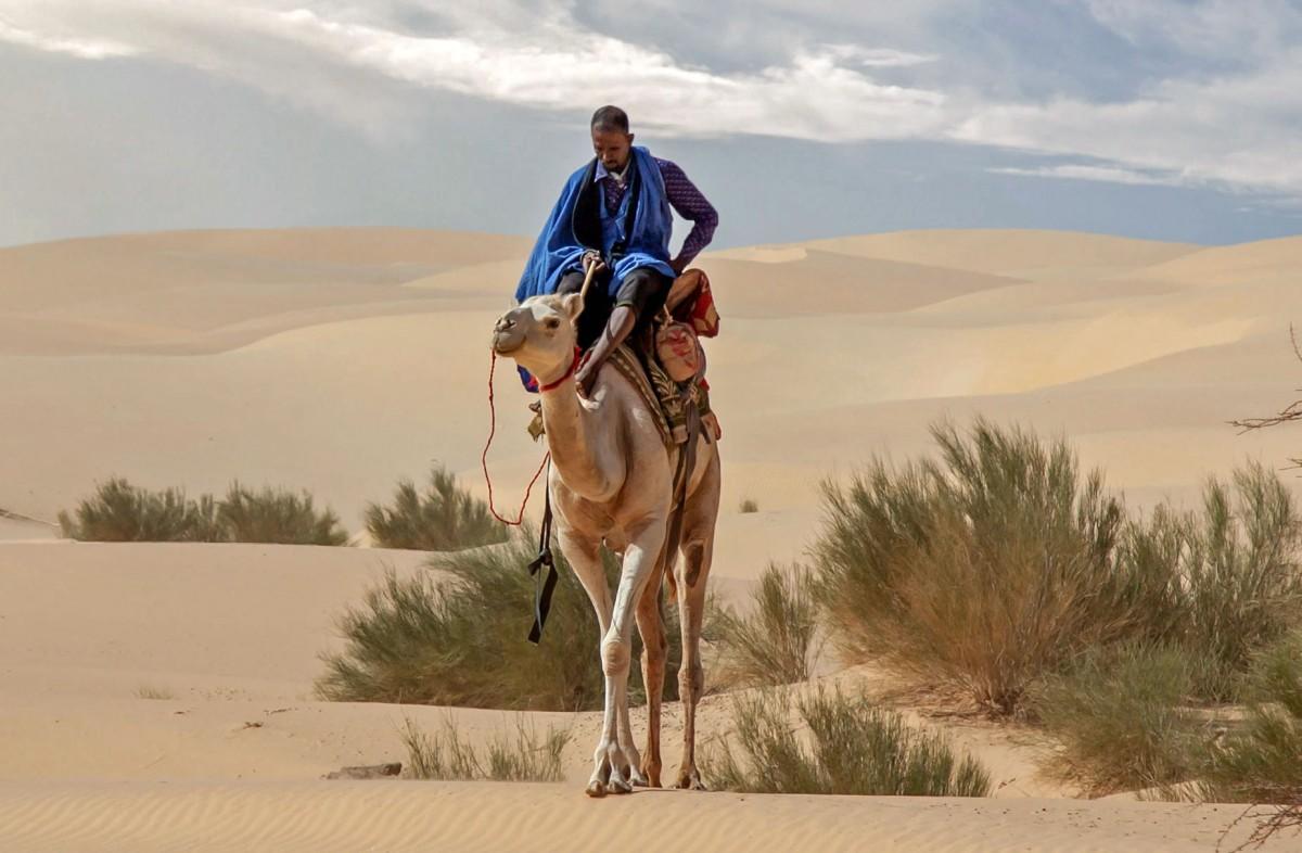 Zdjęcia: gdzieś w piaskach pustyni, Tagant, Spotkanie na szlaku, MAURETANIA