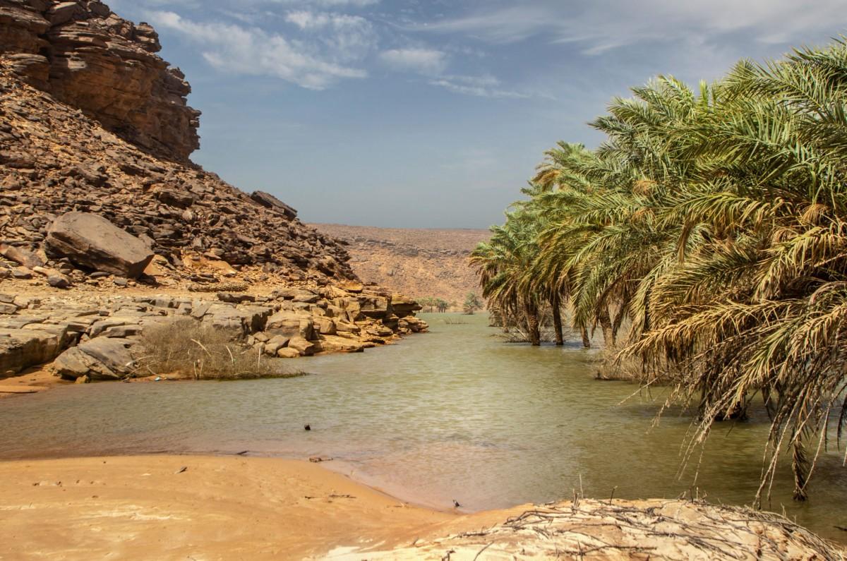 Zdjęcia: Wādī Sakallīl, Adrar, Nad rzeką, MAURETANIA