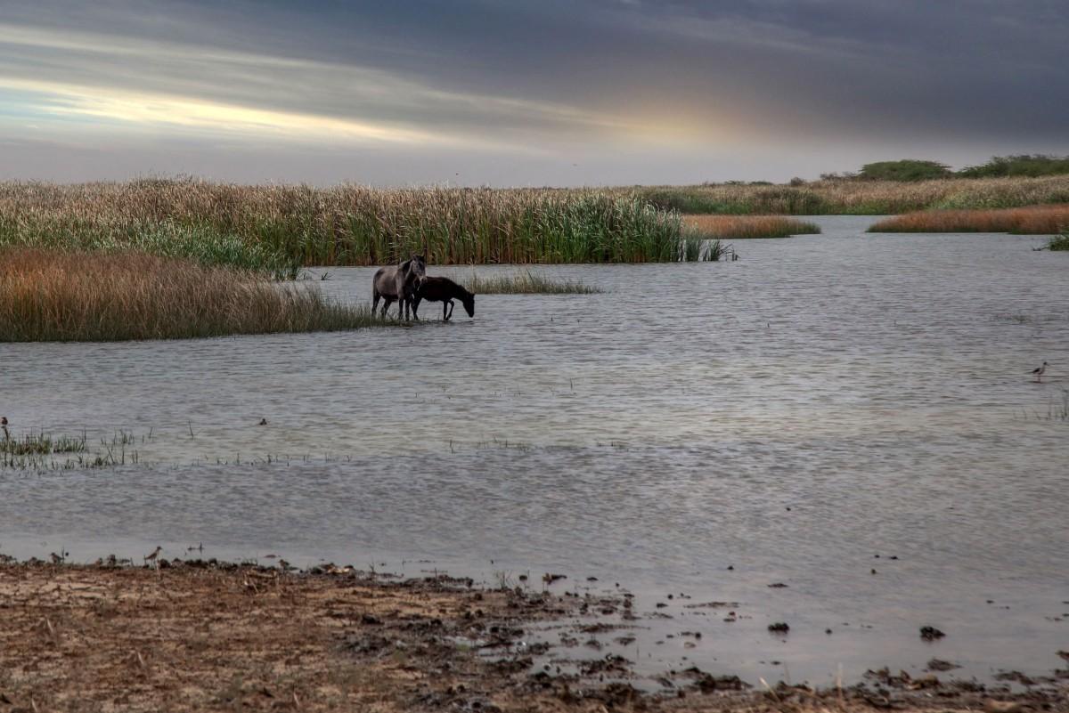 Zdjęcia: gdzieś po drodze, At-Tarariza, Woda, MAURETANIA
