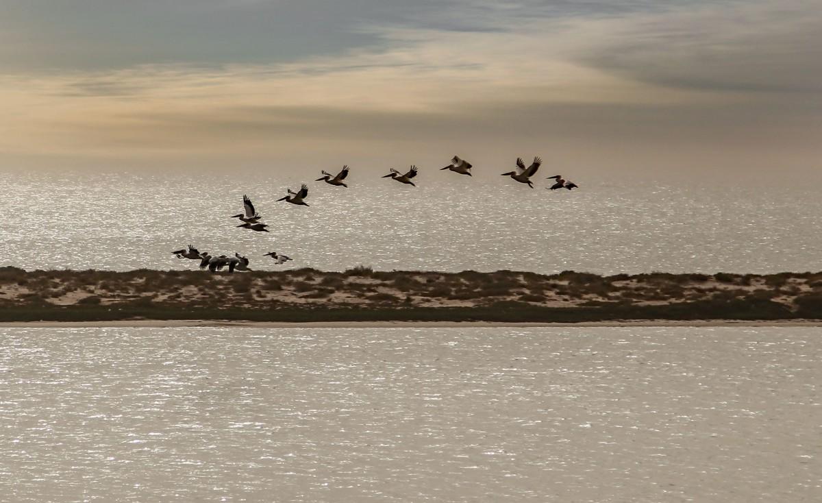 Zdjęcia: Banc d'Arguin,  na wybrzeżu, Pelikany, MAURETANIA