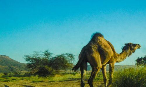 Zdjęcie MAURETANIA / Nouadhibou / plaza / wielkie zwierze
