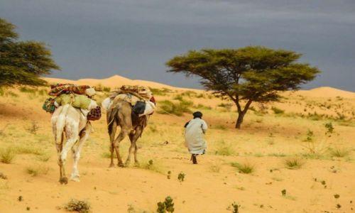Zdjecie MAURETANIA / Sahara / sahara / konkurs