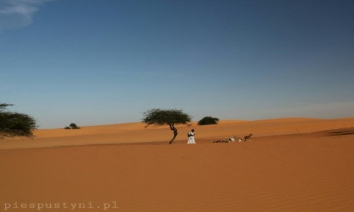Zdjecie MAURETANIA / Sahara / Sahara / Wesołe życie  pastuszka