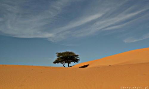 Zdjecie MAURETANIA / Sahara / Sahara / Tych dwoje