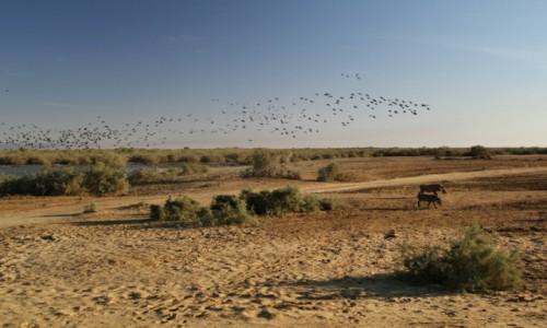Zdjecie MAURETANIA / Sahel / Sahel / Uczęszczana trasa