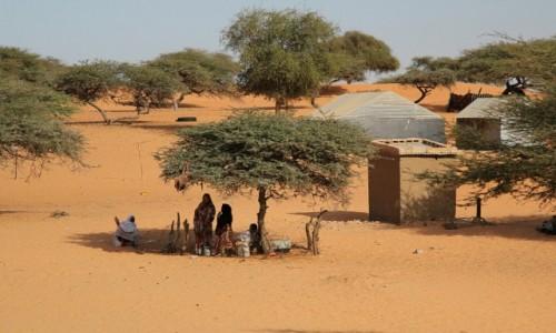 MAURETANIA / Sahel / Sahel / W cieniu drzewa