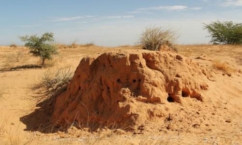MAURETANIA / Sahel / Sahel / Termitiera