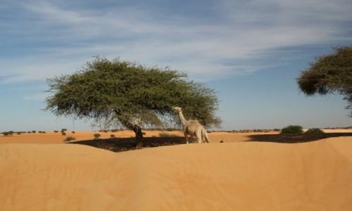 Zdjecie MAURETANIA / Sahel / Sahel / Z dala od innych