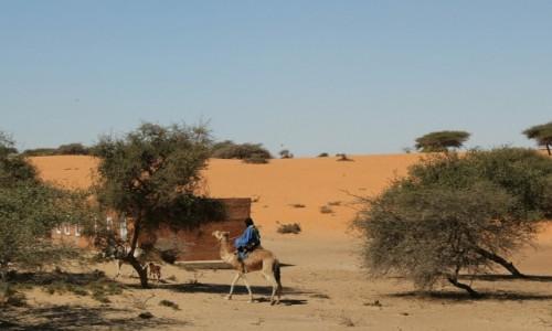 MAURETANIA / Sahel / Sahel / Koniec wypasu na dzisiaj