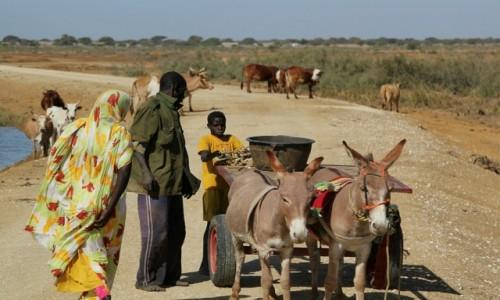 Zdjecie MAURETANIA / Parc National du Diawling / Parc National du Diawling / Po bezdrożach Mauretanii