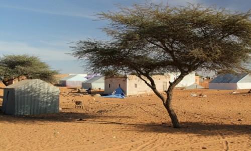 Zdjecie MAURETANIA / Sahel / Sahel / Wioseczka