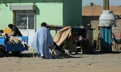 Zdjecie MAURETANIA / Sahel / Sahel / Dostawa kózki