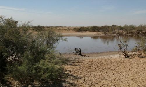 Zdjecie MAURETANIA / Delta rzeki Senegal / Park Narodowy Diawling  / Kąpiel błotna