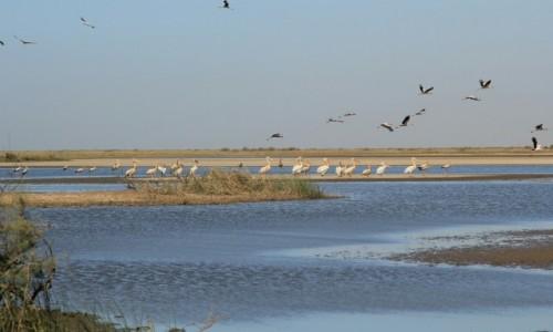 Zdjęcie MAURETANIA /  Wybrzeże Mauretanii /  Park Narodowy Banc d'Arguin / Ptaki
