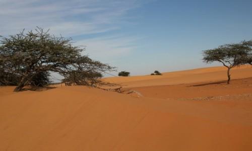 Zdjecie MAURETANIA / Sahara / gdzieś w trasie / Zima w Mauretanii
