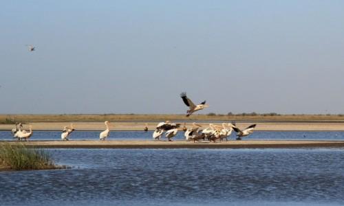 Zdjecie MAURETANIA / Wybrzeże Mauretanii /  Park Narodowy Banc d'Arguin / Ptaki