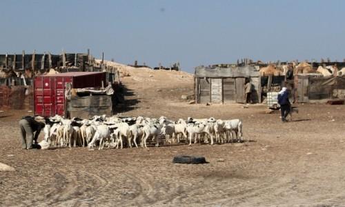 Zdjęcie MAURETANIA / Mauretania / w drodze do Nawazibu / Kozy i ich opiekunowie