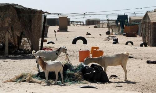 Zdjecie MAURETANIA / Mauretania / gdzieś po drodze / Stare sieci na świeże mleko