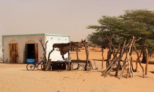 Zdjecie MAURETANIA / Sahel / gdzieś po drodze / Sklepik