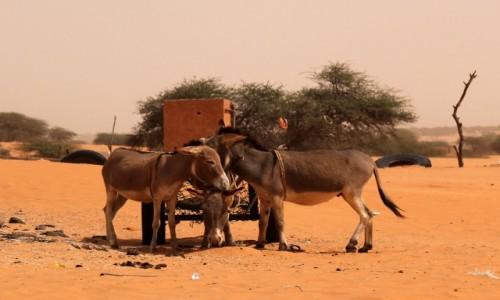 Zdjecie MAURETANIA / Sahel / gdzieś po drodze / Pogaduszki