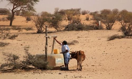 MAURETANIA / Sahel / gdzieś po drodze / W kolejce do wody