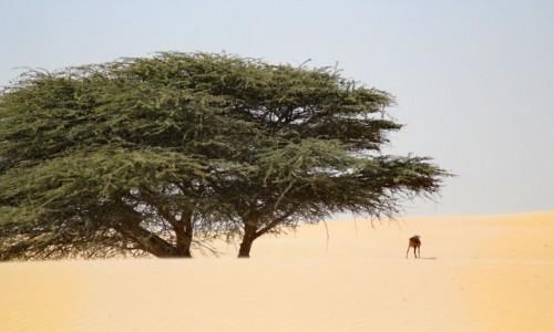 MAURETANIA / Mauretania / gdzieś po drodze / Zwyczajnie