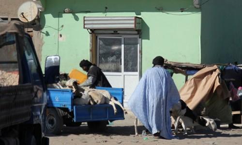 MAURETANIA / Mauretania / gdzieś po drodze / Handel kozami