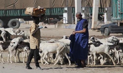 Zdjecie MAURETANIA / Mauretania / gdzieś po drodze / Na stacji benzynowej