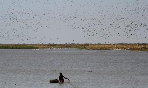 Zdjecie MAURETANIA / Delta rzeki Senegal / Diawling / Połów wśród ptaków