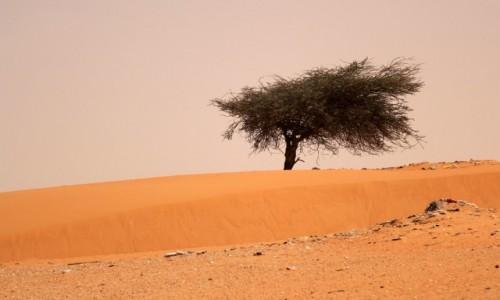 Zdjecie MAURETANIA / Mauretania / gdzieś po drodze / Zmącona forma