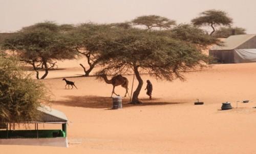 Zdjecie MAURETANIA / delta rzeki Senegal / wioska / Podglądając życie w wiosce