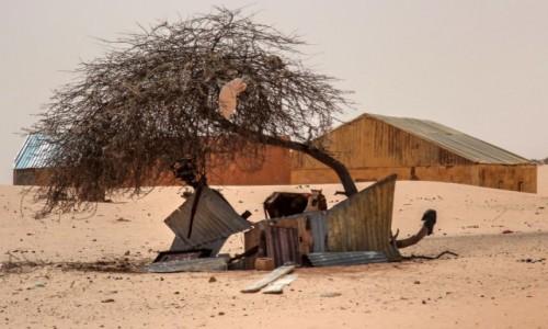 Zdjecie MAURETANIA / Nouakchott / gdzieś po drodze / Zagródka dla zebu