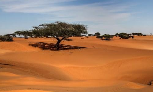 MAURETANIA / Mauretania / gdzieś po drodze / Piaski Mauretanii