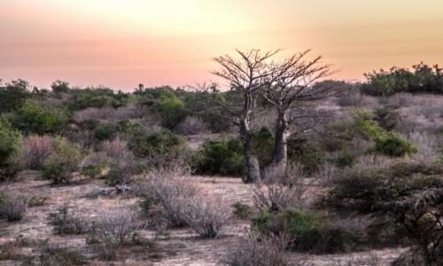 MAURETANIA / delta rzeki Senegal / gdzieś po drodze / Poza aleją