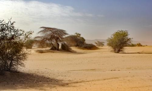 Zdjęcie MAURETANIA / Tagant / gdzieś w piaskach pustyni / Wieje...