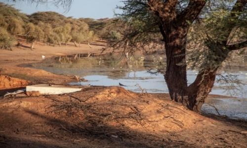 Zdjecie MAURETANIA / Al-Asaba / Tamorte Bukari / Tam gdzie żyją krokodyle